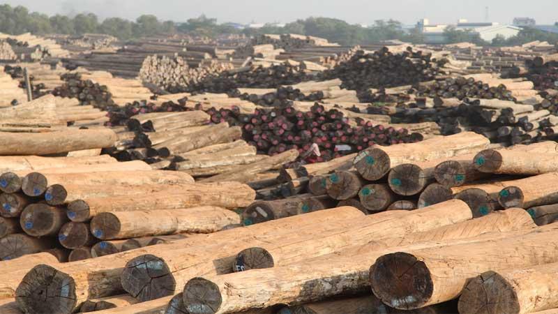 kelebihan kayu merbau dan kayu jati