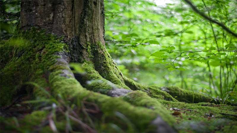 mengenal kayu jati perhutani dan harga kayu jati perhutani 2021