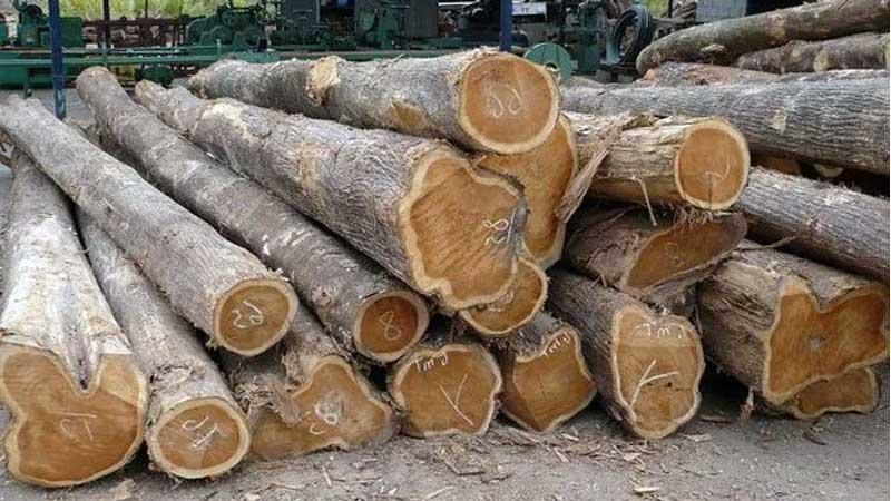 harga kayu jati perhutani 2021