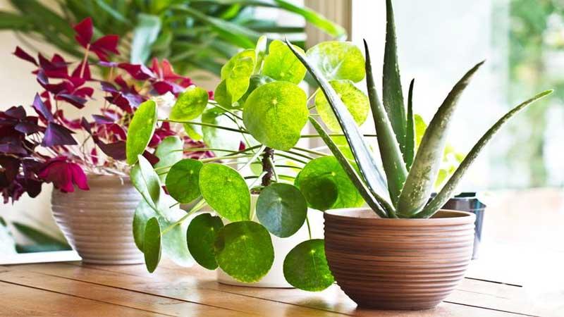 menghadirkan tanaman hijau di dalam ruangan