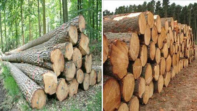 kayu jati sering kayu digunakan untuk keperluan furniture